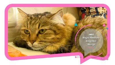 Manfaat Memelihara Kucing untuk Keluarga