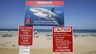 Peselancar Sepuh Tewas Akibat Serangan Hiu Putih di Australia