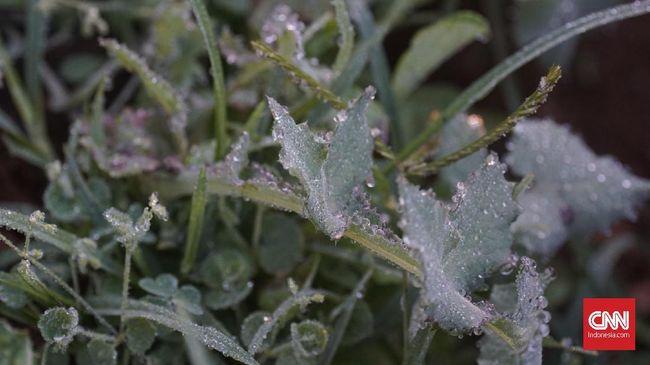 BMKG sebut daftar lokasi terimbas Bediding yang membuat suhu lebih dingin belakangan.