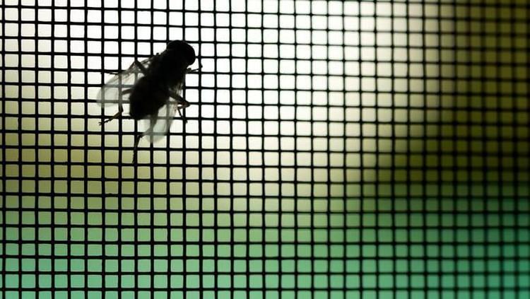 Lalat makin banyak masuk rumah sejak musim hujan. Hii, belum lagi yang bikin khawatir, lalat jadi vektor berbagai penyakit. Ini cara mengusirnya dengan alami.