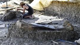 Peneliti Temukan Dinosaurus Kanibal Pemakan Dino Lain