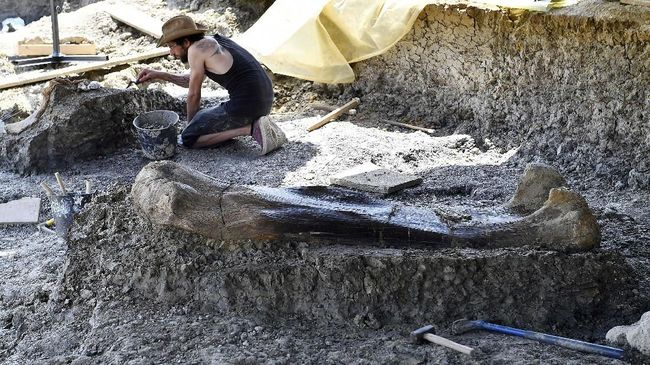 An excavator palaeontologist from the National Museum of Natural History of Paris, clears the debris from around a pelvis bone situated near a femur of a Sauropod on July 24, 2019, after it was discovered earlier in the week during excavations at the palaeontological site of Angeac-Charente, near Ch'teauneuf-sur- Charente, south western France. - The 140 million-years-old, two meters long, 500 kilogramme femur of the Jurassic period Sauropod, the largest herbivorous dinosaur known to date, was discovered nestled in a thick layer of clay by a team of volunteer excavators from the National Museum of Natural History working at the palaeontological site. Other bones from the animal's pelvis were also unearthed. (Photo by GEORGES GOBET / AFP)