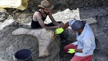 Ahli Temukan Fosil Dinosaurus Terbesar di Australia