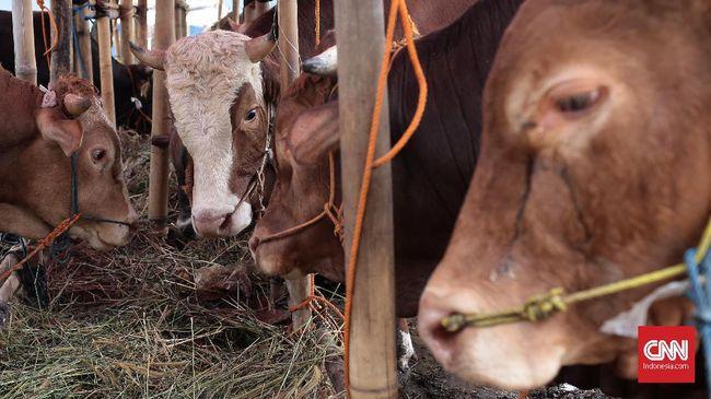 Pejabat Kemensos disebut menggunakan uang suap diduga berasal dari pengadaan bansos covid untuk membeli sapi kurban.