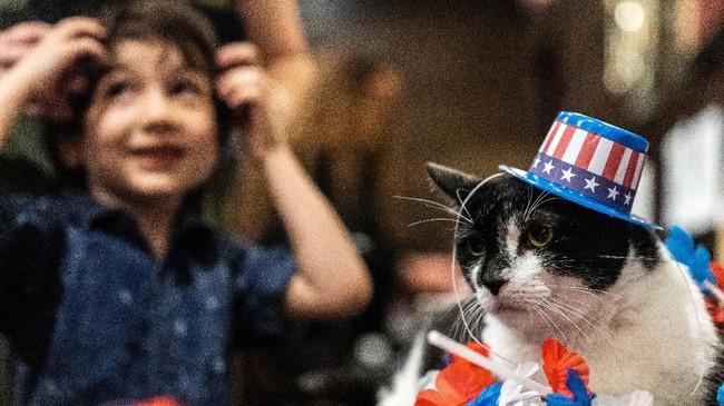 Para kucing di New York berlenggok di catwalk demi mendapatkan tuan baru lewat adopsi.