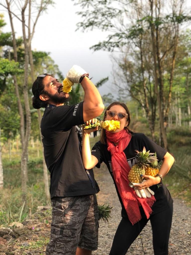 Usai berkeliling, para host akan memanen buah nanas khas Pemalang lho.