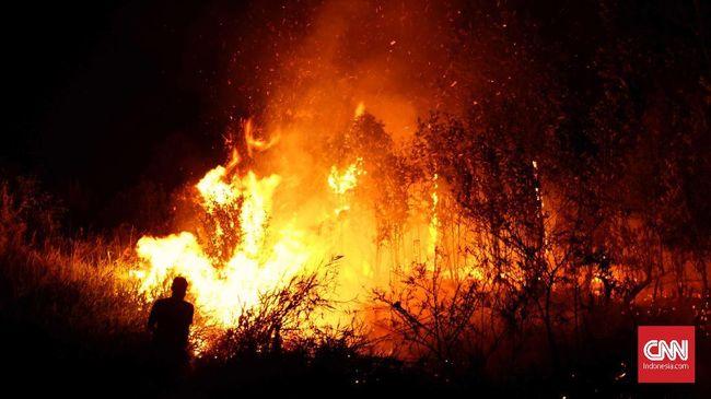 Kepolisian menyebut DW ingin membuka lahan dengan membakar, namun api cepat berkobar hingga hutan lindung di lereng Gunung Lewotobi.