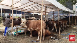 Pedagang Hewan Kurban dari Luar DKI Wajib Kantongi SIKM