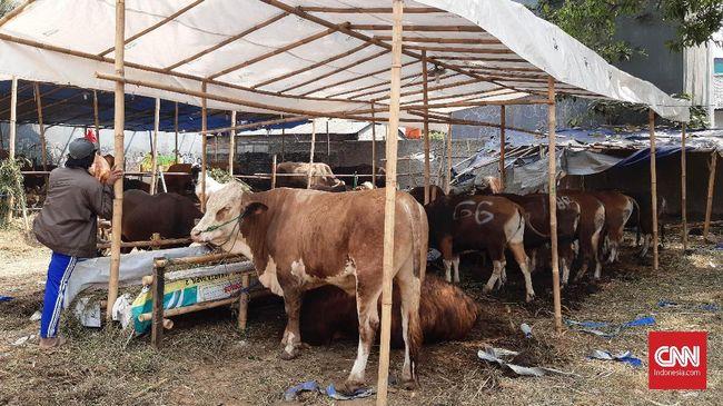 Keluh Kesah Penjual Hewan Kurban Sewa Lapak Agar Tidak Mengganggu di Trotoar.