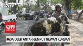 VIDEO: Jasa Ojek Antar-Jemput Hewan Kurban