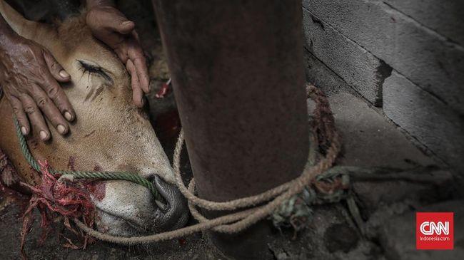Suasana pemotongan hewan kurban di kawasan kelurahan Palmeriam, kecamatan Matraman, Jakarta, Minggu, 11 Agustus 2019