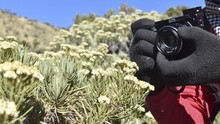 5 'Pantangan' saat di Gunung, Termasuk Petik Bunga Edelweis