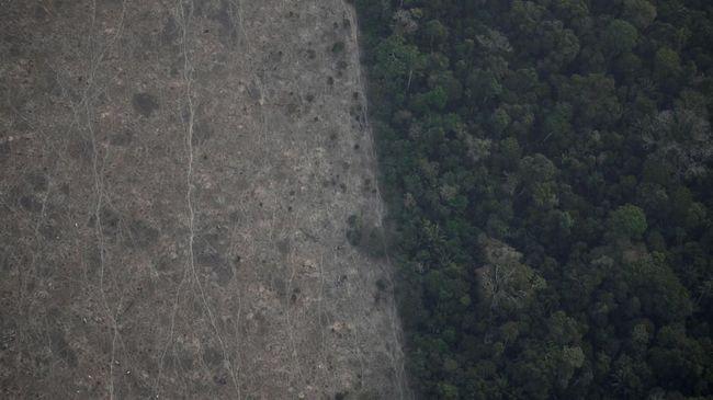 Spesies Tanaman dan Hewan Langka Penghuni Hutan Amazon