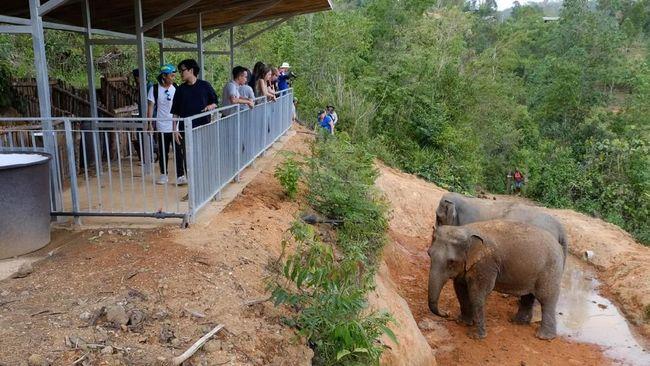 Semakin banyak kawasan wisata di Thailand yang melarang atraksi gajah. Indonesia patut mencontoh konsep wisata ini.