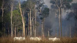 Jaksa Desak Menteri Brasil Rusak Hutan Amazon Dipecat