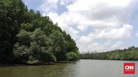 KLHK Tanami 600 Ribu Ha Mangrove, Walhi Sebut Jualan Karbon