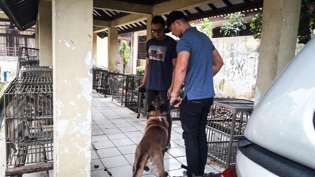 Anjing yang diduga menggigit seorang ART hingga tewas di Jakarta Timur telah diamankan dan dibawa untuk diobservasi 10 hari di Pusyankeswannak, Ragunan.