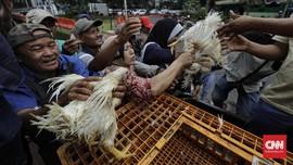 Pusat Pengendalian Penyakit AS Larang Orang 'Cium' Ayam