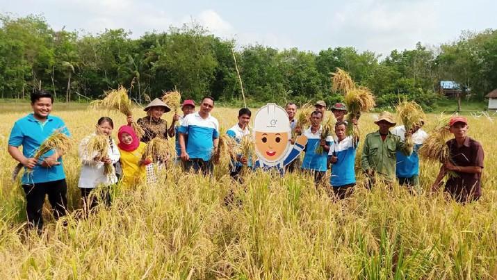 Petani Binaan Medco Panen Padi Organik Rp 285 Miliar