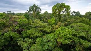 UU Ciptaker Hapus Kewajiban 30 Persen Hutan Warisan Habibie