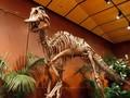 Bekas Jejak Kaki Dinosaurus 100 Juta Tahun Ditemukan