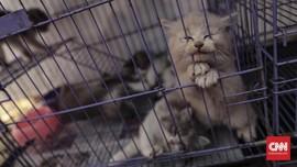 FDA Imbau Penerapan Physical Distancing bagi Kucing