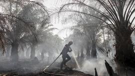 KLHK Diduga Memaksa Batalkan Diskusi Deforestasi Sawit