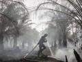 Sebagian Besar Lahan Terbakar Disebut Milik Perusahaan