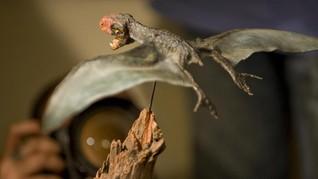 Fosil Dinosaurus Kecil Ukuran 40 Cm Ditemukan di Madagaskar