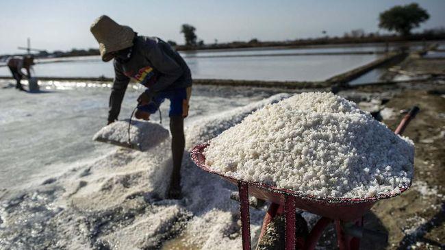 This picture taken on September 16, 2019 shows Indonesian workers harvesting salt in Sidoarjo, East Java province. (Photo by Juni Kriswanto / AFP)