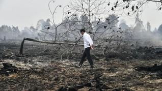 Nyaris 100 Juta Hektare Hutan Musnah di Bumi Selama 20 Tahun