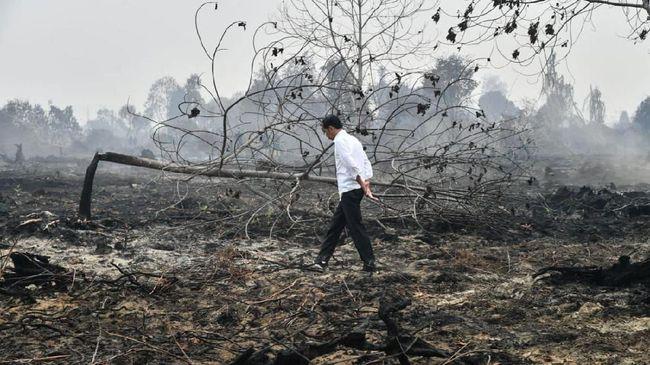 Luas hutan pada 2020 dibanding total wilayah daratan di Indonesia mengalami penurunan menjadi 50,9 persen dari 52,5 persen pada 2015.