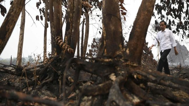 Presiden Jokowi: 99 Persen Kebakaran Hutan Ulah Manusia