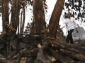Jokowi: 99 Persen Kebakaran Hutan karena Ulah Manusia