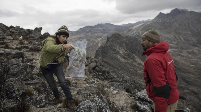Ilmuwan mempelajari perubahan suhu dan kehidupan di gletser Humboldt, Venezuela.