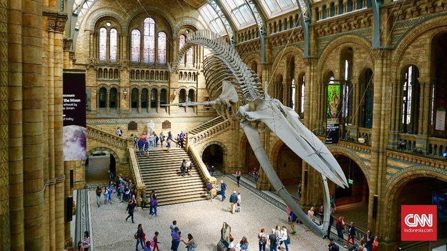 Natural History Museum, London, Inggris. (CNNIndonesia/Ardita Mustafa)