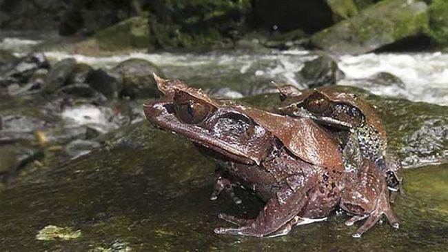 LIPI mengungkap sejumlah burung, katak, dan kodok yang masuk kategori terancam punah.