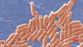 Sederet Bakteri 'Penghuni' Toilet dan Bahayanya Bagi Tubuh