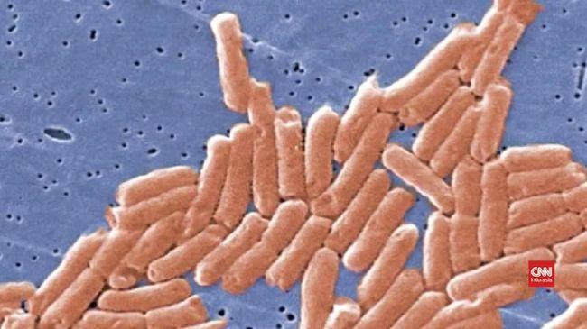 Bila kamar mandi jarang dibersihkan, ada sejumlah bakteri penyebab penyakit paling umum yang menghuni toilet.