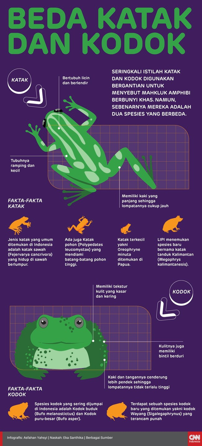 Katak dan kodok digunakan bergantian untuk menyebut mahkluk amphibi berbunyi khas. Namun, sebenarnya mereka adalah dua spesies yang berbeda