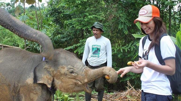 Davina Veronica tampak sedang memegang belalai seekor anak gajah di Sumatera.