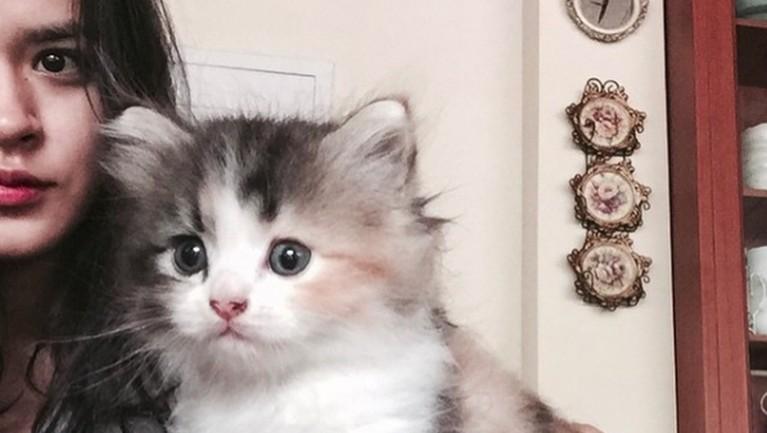 Saking cintanya dengan kucing, Raisa sampai menampilkan sang kucing masuk ke dalam video klipnya.