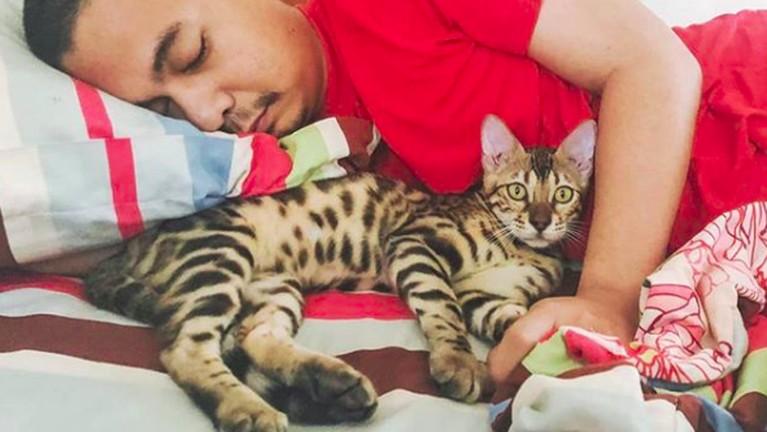 Raditya Dika, penulis juga standup comedy ini memang dikenal memiliki banyak kucing dan sangat memanjakan binatang kesayangannya. Tak jarang, ia tidur bersama kucingnya.