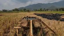 Produktivitas Pertanian RI Menurun Sejak 2011