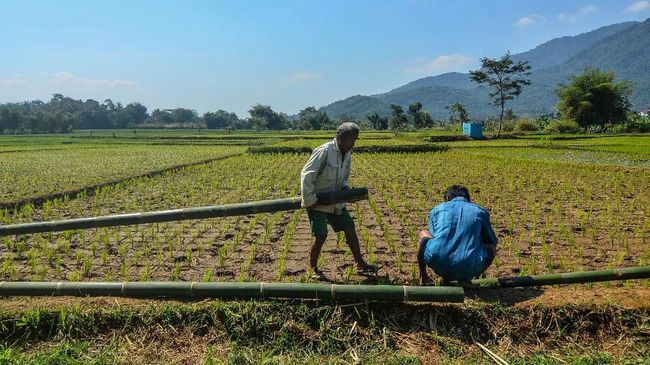 Presiden Jokowi menugaskan Mentah Syahrul dan Menteri ATR Sofyan untuk memperbaiki data luas sawah.