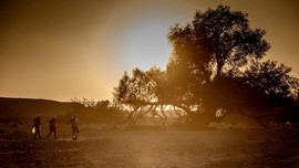 Penyebab Badai Gurun dari Sahara Sampai ke Amerika