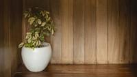 <p>Interior dan eksterior penginapan milik Nicholas Saputra didominasi oleh kayu. Membuatnya lebih terlihat hangat dan menyatu dengan alam. (Foto: Instagram @terrariotangkahan)</p>