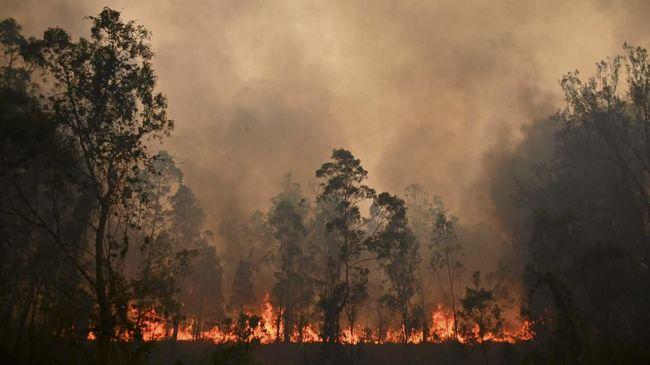 Seorang lelaki Australia berusia 51 tahun di Kota Ebor, New South Wales, diadili gara-gara membakar lahan dan menyulut kebakaran.