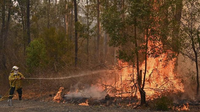 Korban meninggal dunia kebakaran hutan yang terjadi di Australia bertambah menjadi empat orang hingga Kamis (14/11).