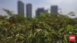 5 Tanaman Mudah untuk Pemula yang Ingin Berkebun